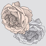 Tea rose, hand-drawing. Vector illustration. Royalty Free Stock Image