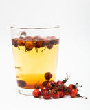 Tea from rose hips Royalty Free Stock Image
