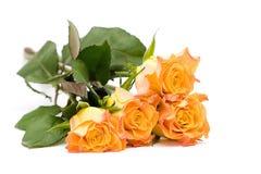 Tea roses Royalty Free Stock Image