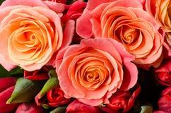 Tea roses Stock Photos
