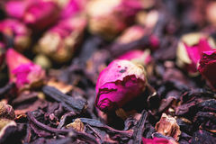 Tea roses and dried hibiscus flower Royalty Free Stock Image