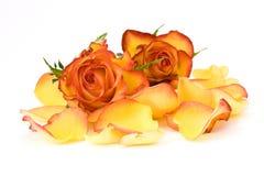 Tea roses and rose petals Royalty Free Stock Photos