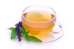 Tea sage Stock Photos