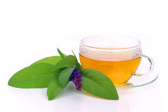 Tea sage Stock Photography