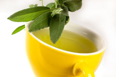 Tea of Sage Plant Stock Image