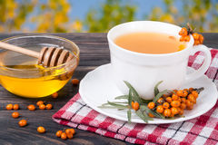 Tea of sea-buckthorn berries with honey on wooden table blurred garden background Stock Photography