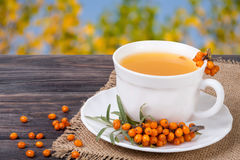 Tea of sea-buckthorn berries with honey on wooden table blurred garden background Royalty Free Stock Photos