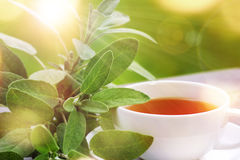 Tea served outside in the sun. Sage tea with green leaves served on the terrace Stock Images