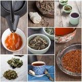 Tea set with tea crop Stock Image