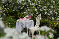 A tea set Royalty Free Stock Images