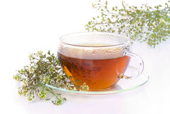 Tea shepherds purse royalty free stock photos