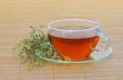 Tea shepherds purse Royalty Free Stock Images
