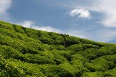 Tea and Sky Stock Photography