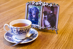 Herbal tea and photo-frame. A cup of herb tea and a photo of two pet dogs Royalty Free Stock Image