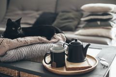 Tea with steam in room in morning sunlight. Still life details in home interior of living room. Black cat relaxing on sweater. Cup of tea on a serving tray on Royalty Free Stock Photography
