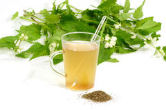 Tea of stinging nettles Stock Images
