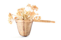 Tea strainer with dried linden flowers. On white background Royalty Free Stock Photo