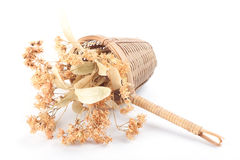 Tea strainer with dried linden flowers. On white background Royalty Free Stock Images