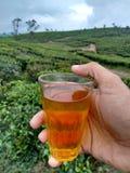 Tea from tea estate Royalty Free Stock Photo