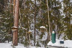Tea from a thermos in the winter cold forest royalty free stock photography