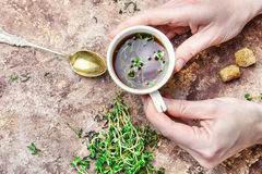 Tea with thyme Stock Image
