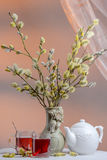 Tea time with blooming willow. Vase with blooming furry pussy willow branches, two glass cups of red color hibiscus tea and white porcelain tea kettle on white Royalty Free Stock Image