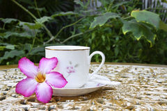 Tea Time in the Garden with Desert Rose Flower Royalty Free Stock Images