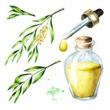 Tea tree essential oil set. Medicinal  and cosmetics plant, Watercolor hand drawn illustration isolated on white background.  vector illustration