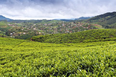 Tea Tree Field and vegetable gardens, Sri Lanka Stock Photos