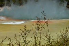 Tea tree at the geotermal area Stock Photos