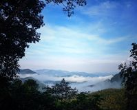 tea tree mountain Stock Photo