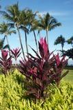 Tea tree plant. Colorful tea tree plant in tropical landscape Stock Image