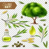 Tea Tree Set. Botanical realistic set with tea tree flowers leaves and bottle with oil isolated on transparent background vector illustration vector illustration