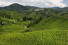 Tea in the Valley Royalty Free Stock Images