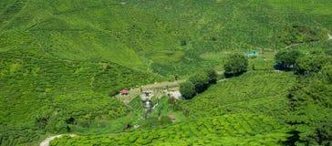 Tea Valley. Cameron Bharat tea valley in cameron highland Royalty Free Stock Photo