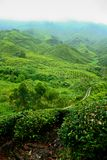 Tea Valley, Cameron Highlands Royalty Free Stock Images