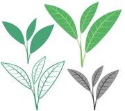 Tea. Vector illustration (EPS 10 Stock Photo
