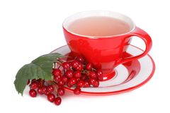 Tea with viburnum berries isolated Royalty Free Stock Photography