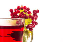 Tea viburnum in a cup Stock Photography
