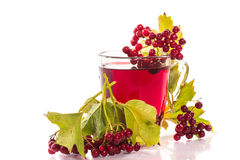 Tea viburnum in a cup Royalty Free Stock Image