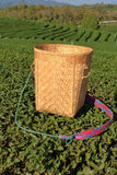 Tea wooden picker basket over the bushes in tea plantations. The tea wooden picker basket over the bushes in tea plantations Royalty Free Stock Images