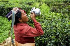 tea worker at doors west bengal india