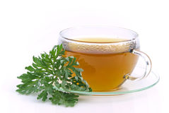 Tea wormwood Stock Image