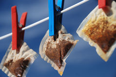 Teabags on a washing line. Three teabags drying on a washing line Royalty Free Stock Image