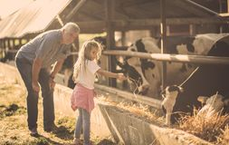 Teach them the right values. Granddaughter and grandfather on the farm together. Close up. Copy space stock photo