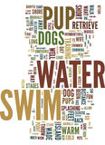 Teach Your Pup To Swim For Fun And Exercise Text Background  Word Cloud Concept Stock Images