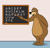 Teacher Bear. Big wise bear teacher cartoon character, inside a school classroom teaching the English alphabet, pointing at a blackboard with a stick. No Stock Photography