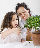 Teacher child plant. Teacher pupil  and small poted tree Stock Photos
