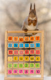 Teacher explains the capitals. Close up of  red squirrel standing  on a wooden frame with capitals and numbers Royalty Free Stock Photography