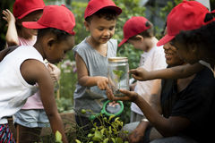 Teacher and kids school learning ecology gardening Royalty Free Stock Image